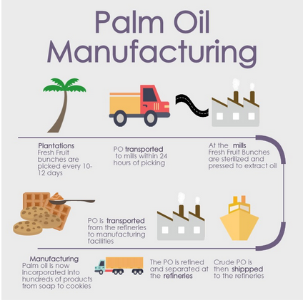 Palm Oil Infographics Sustainablepalmoil Org
