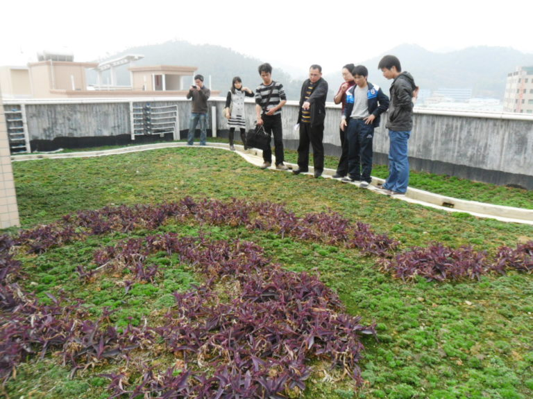 green roof, china