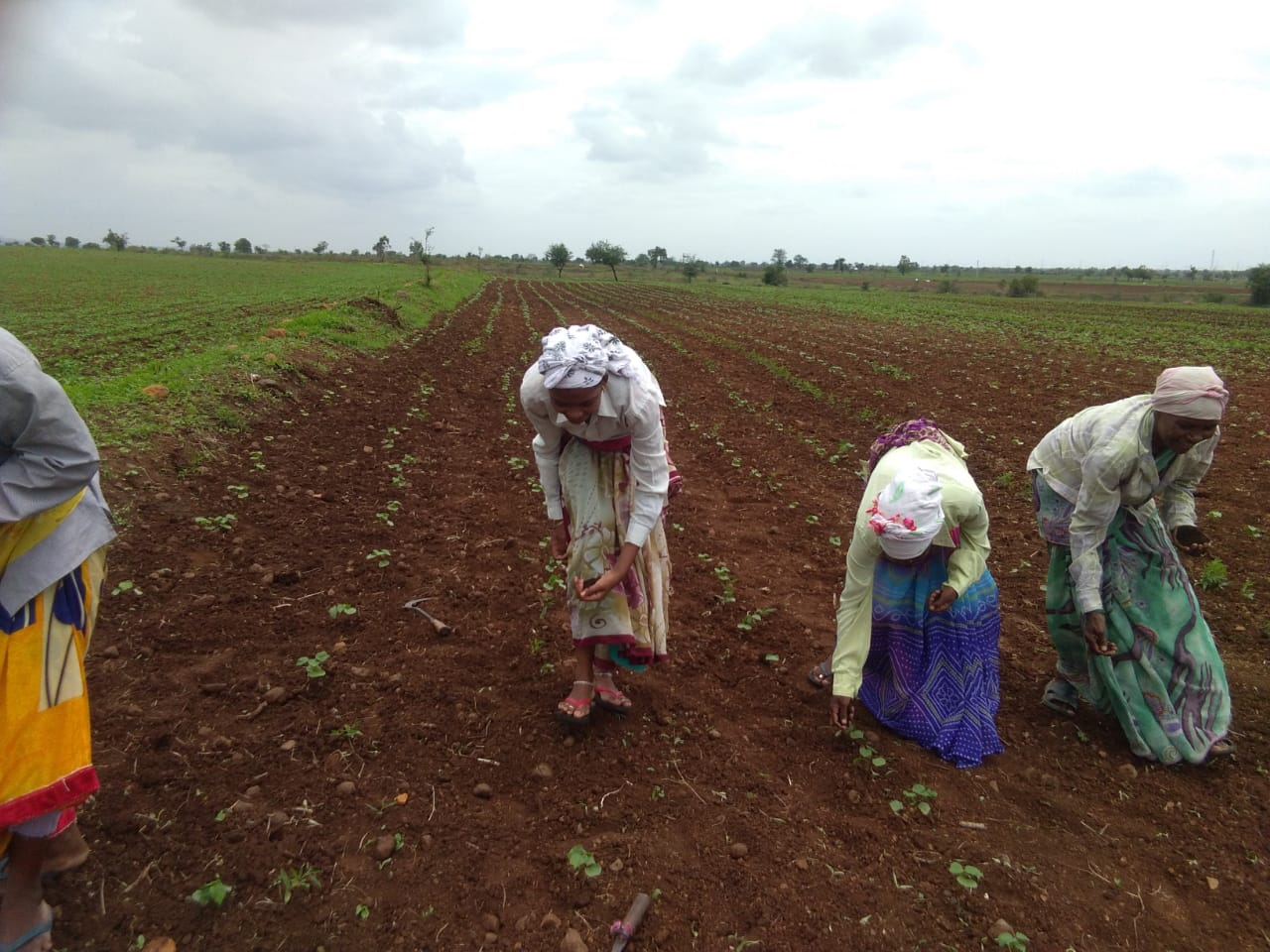 Cotton cultivation, W+W Alliance